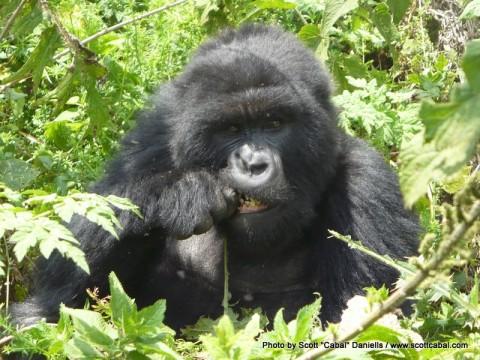 Africa Day 11 – Gorilla Trek