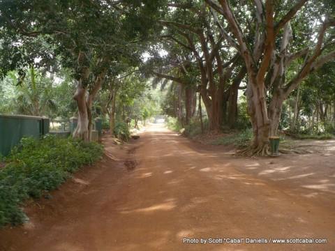 A morning in Entebbe